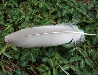 voir une plume